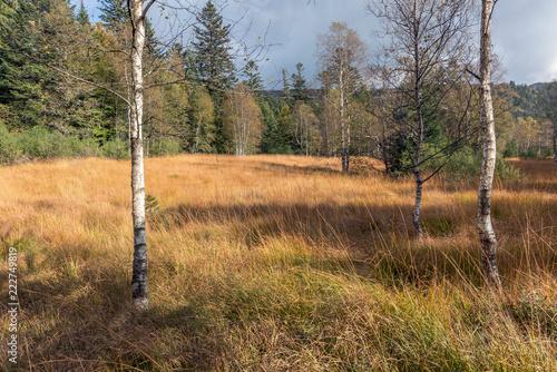 Fototapeta Tourbière dans les Vosges