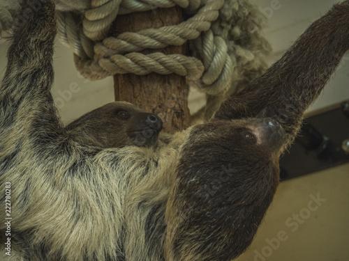 Foto Murales Sloth