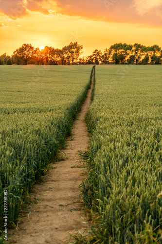 Sunset Over Path Through Wheat, Corn or Barley Field