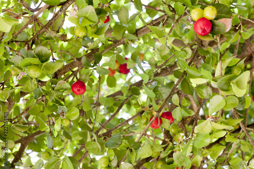 Foto Murales Red cherries on a tree with green leaves.
