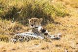 Сheetah on Kenyan savannah - 222796407