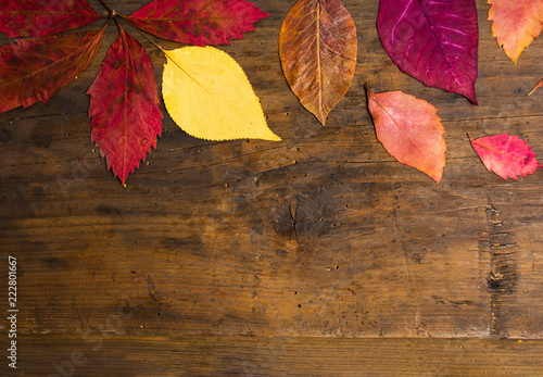 Jesień leafs tło na naturalnej drewnianej desce