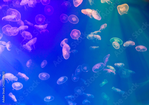 Leinwandbild Motiv jellyfish, Cross process technique for background use