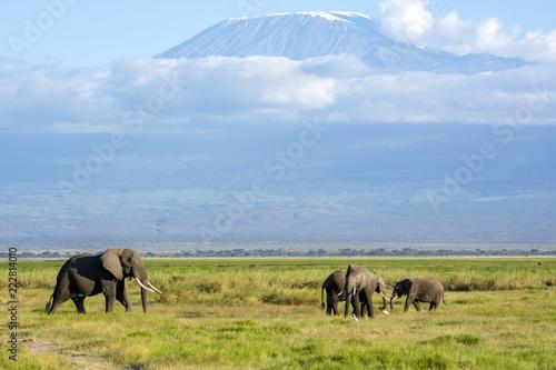 Fototapeta African Elephant!