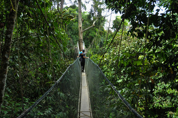 Canopy bridge in Malaysia © Юлия Серова