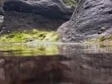 Algas en charcos de marea - 222821424