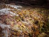 Algas en la marea