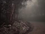 Niebla en la montaña de Lugo - 222821664