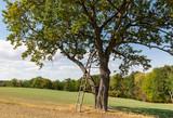 Hochsitz am freistehenden Baum - 222831676