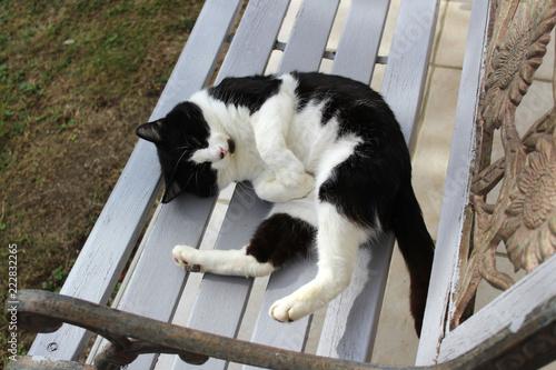 Foto Murales chat blanc et noir allongé