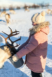 Little girl feeding reindeer - 222852461