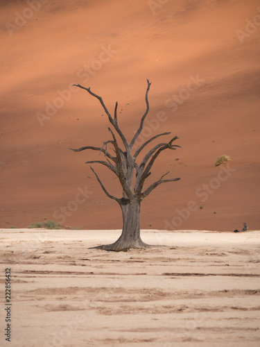 DeadVlei salt pan in Sossusvlei, inside the Namib-Naukluft Park in Namibia.