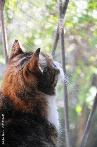 Foto Murales cute cat beside the window