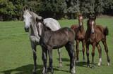 herd horses standing together - 222866490