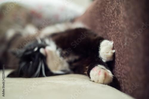 czarno-biały futrzany kot leży na kanapie