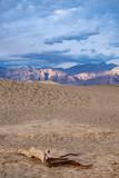 Mesquite Sand Dunes - 222870241