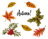 Various green and orange leaves and growths isolated on white background. Seasonal autumn collection illustration.