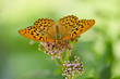 Leinwanddruck Bild - Butterfly on a flower