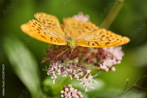 Butterfly on a flower - 222876629