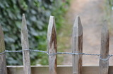 old paling fence - 222879655