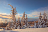 Larch and fir trees covered with snow at sunrise on the slope in Tatranska Lomnica, popular travel destination and ski resort in Slovakia - 222907446