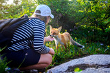 A young girl is stroking a fox.Communication of man with wild animals. - 222910690
