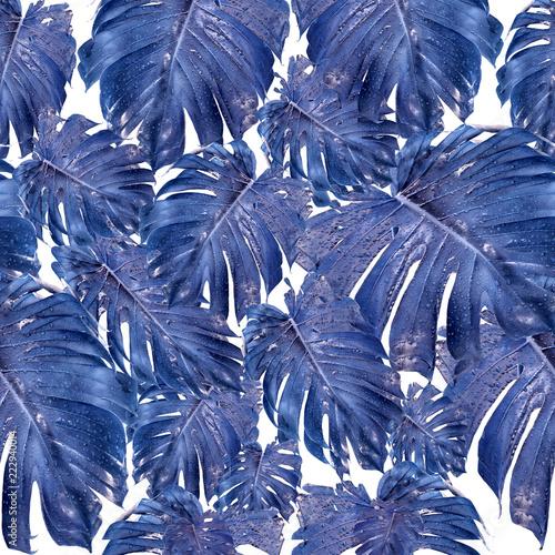 piekny-design-z-niebieskimi-liscmi-monstera