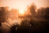 Wollgras im Sonnenaufgang - 222941041