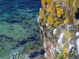 Nistplätze von Möwen an der Atlantikküste in Nordirland - 222948212