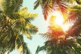 Coconut palm tree on  blue sky background. - 222950457
