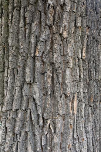 Background / Texture of tree bark - 222952429