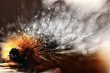 fluffy caterpillar / macro insect, larva, beautiful macro enlarged caterpillar - 222965298