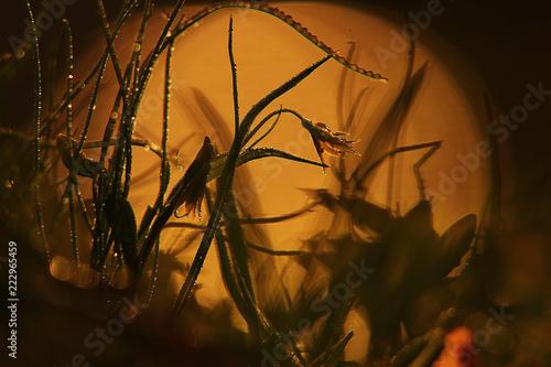 Sunset wild flowers nature macro - 222965459