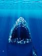 3d rendered illustration of a shark