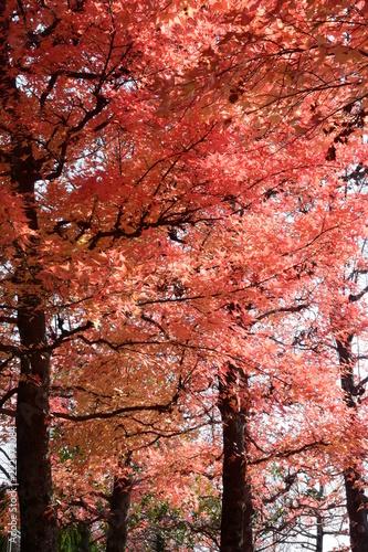 秋の風情、紅葉や黄葉 - 222972084