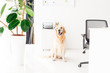 golden retriever dog sitting on floor near plant