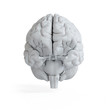 3d rendered illustration of a white brain