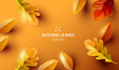 Autumn Background with Falling Leaves Design