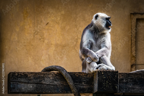 Wall mural Tiere im Zoo