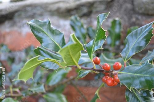 Foto Murales Winter Holly Berries