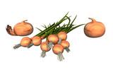 Schnittlauch und Zwiebeln - 222990033
