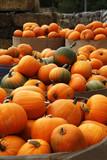 Fair of a pumpkins in California - 222990264