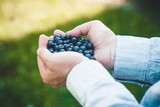 Farmer with Blueberries - 223003208