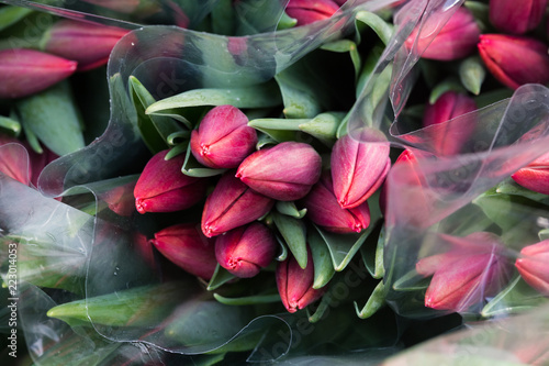 Tulip. Beautiful bouquet of tulips. Colorful tulips. Flower plants cultivation in greenhouse - 223014053