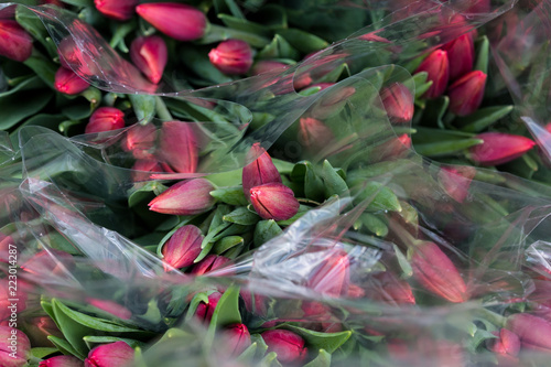 Sticker Tulip. Beautiful bouquet of tulips. Colorful tulips. Flower plants cultivation in greenhouse