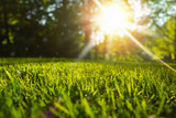 Tranquil fresh grass for growth and water concept mother nature.  Copy space for text. - 223015616