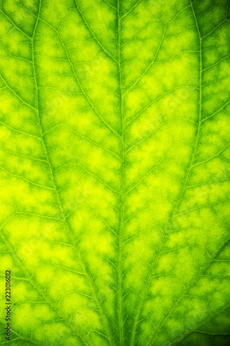 Leinwandbild Motiv Detail of a fresh green leaf with a drop of dews close up background.
