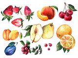 Hand drawn watercolor set of illustration with fruits and berrie