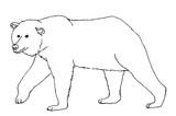 Braunbär Kontur