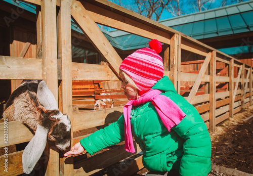 little girl feeding sheeps at farm, kids learn animals - 223035092